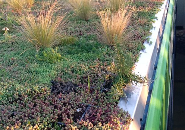 phytokinetic-plantas-urbangardensweb