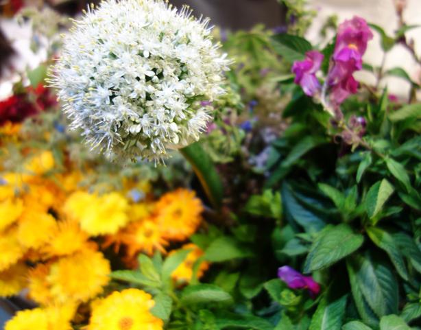 la-calendula-flowers-urbangardensweb