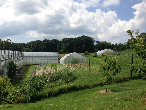 stone-barns-greenhouses