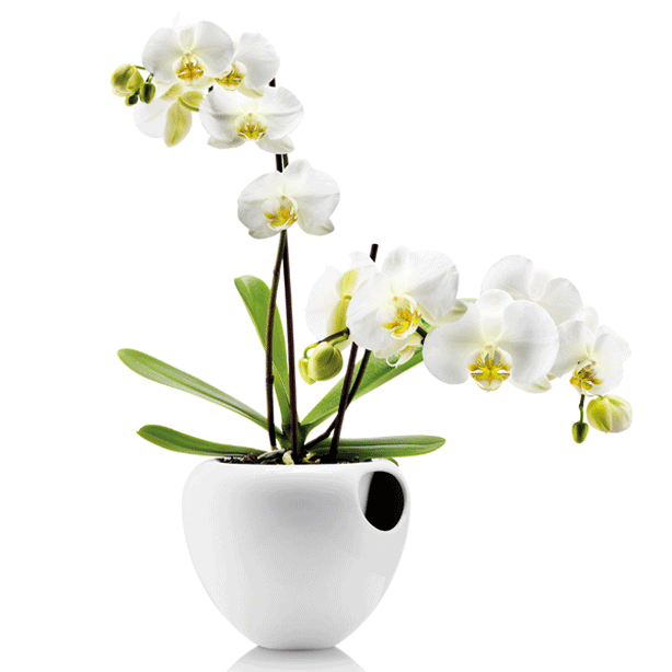 Eva Solo Self-Watering Orchid Pot with Absorbing Wick