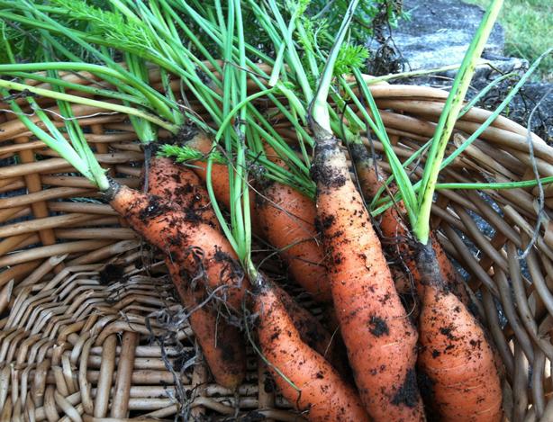 carrots-614