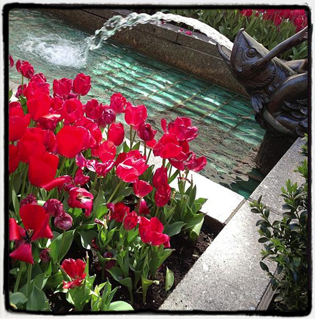 nyc-rockcenter-fountain-tulips-bronze-fountain