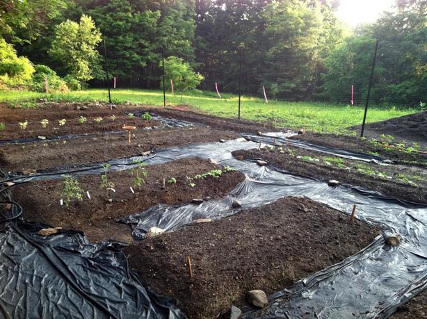 veg-garden-planting-614