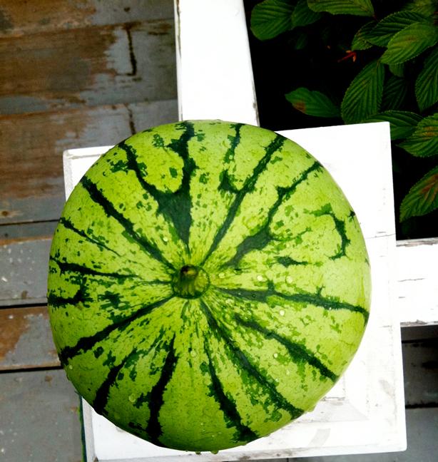 watermelon-614