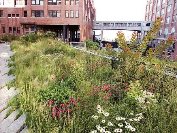 high-line-new-york-city-timber-press-piet-oudolf