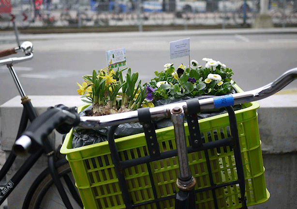 dutch-guerrilla-gardening-by-bicycle-guerrilla-garden-planter