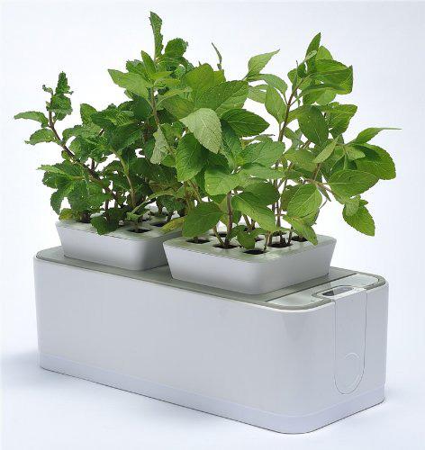 hydroponic-panter