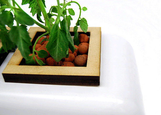 Designer-Tabletop-Hydroponic-Planter