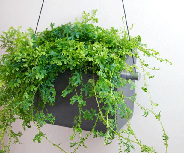Opus-Garten-Hängen-self-irrigating-Wall-Planter