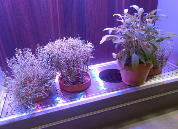 arclinea-kitchn-greenhouse-plants-trio