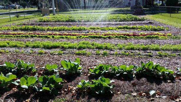 Community-Garden-December_fiskars_POT_grants_urbangardensweb