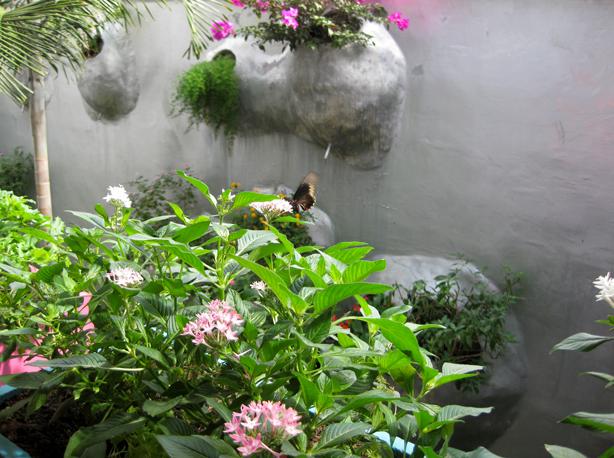 husos_bioclimate-building_butterflies_urbangardensweb
