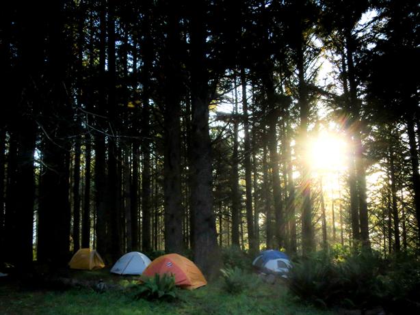 Burk-campsite_meadowlark__urbangardensweb_614