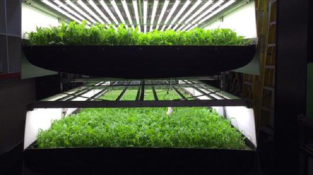 aerofarms-indoor-urban-aeroponic-farms-urbangardensweb