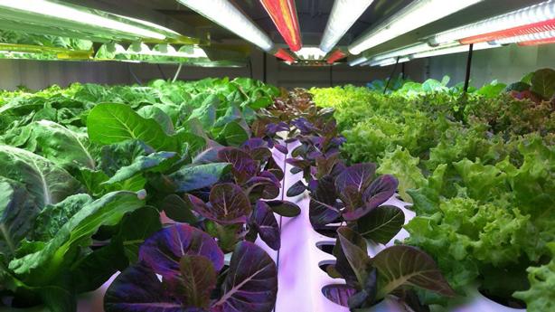 mirai-indoor-urban-plant-factory-farm-urbangardensweb