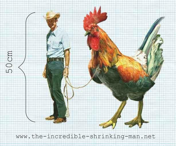 arne_hendriks_incedibl_shrinking_man_chicken