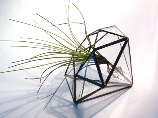 Diamond shaped terrariums with air plant