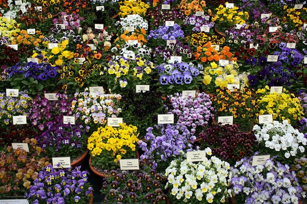 flowers-urbangardensweb