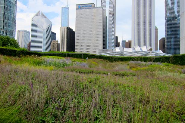lurie-garden-2-urbangardensweb
