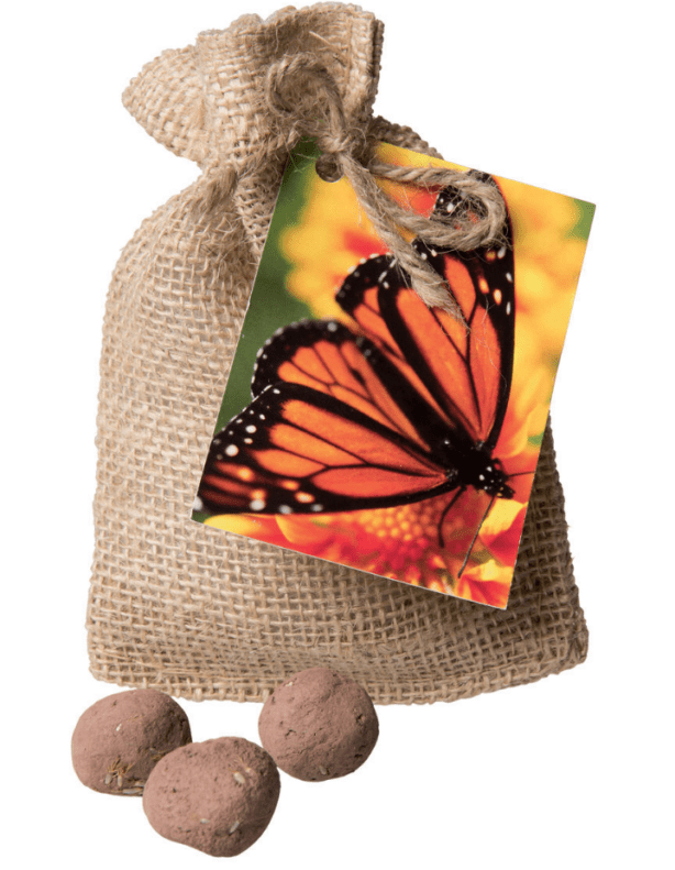 Monarch Butterfly Seed Bombs
