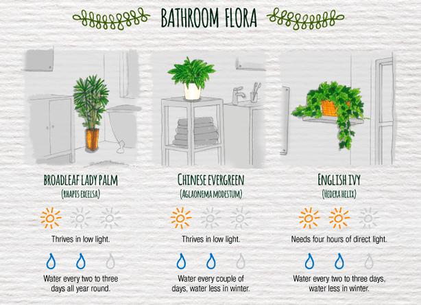 Indoor-Plant-Care-Cheatsheet-BATHROOM