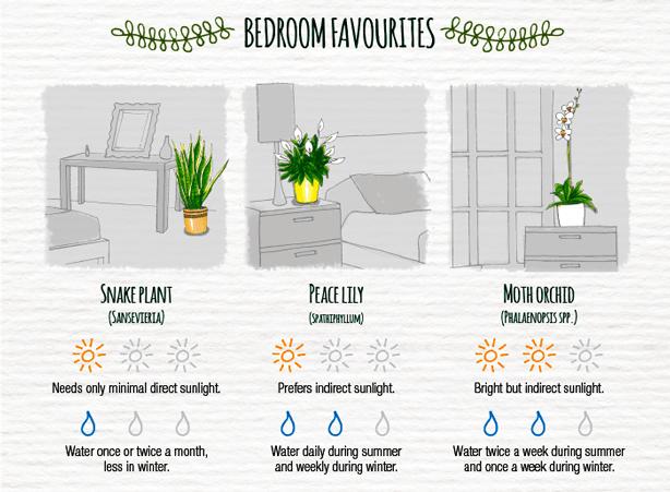 Indoor-Plant-Care-Cheatsheet-BEDROOM