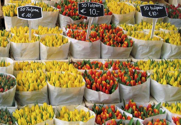 tulip-florist_614