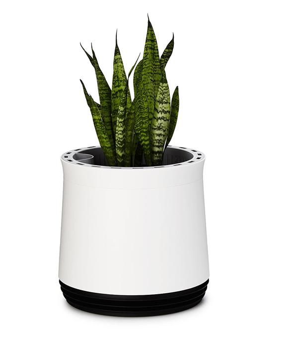 air-purifier-planter