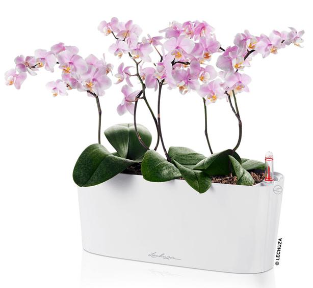 delta_Lechuza-windowsill-planter-gardeners-supply