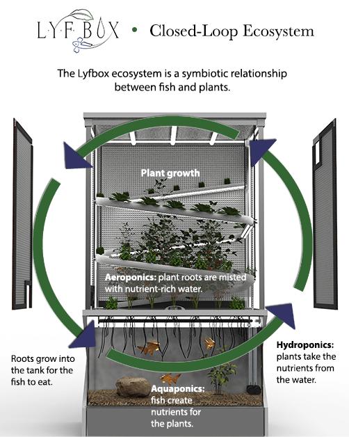 lyfbox-diagram-2