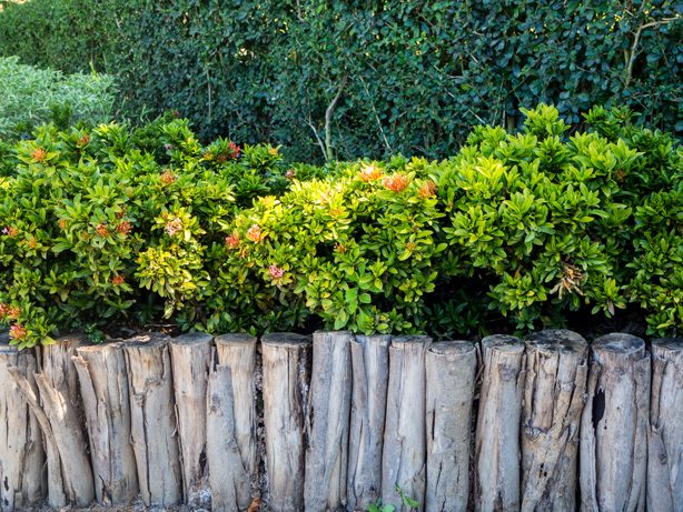 Privacy bushes from Garden Goods Direct