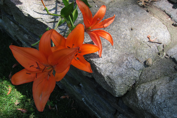 Connecticut-house-and-garden-makeover-orange-lily-robin-plaskoff-horton-urbangardensweb