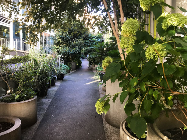 London_secret_garden