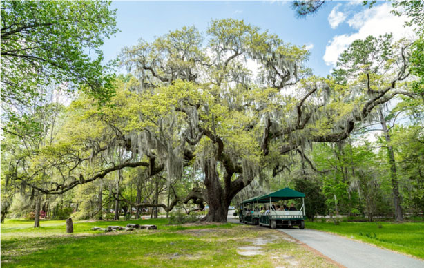 Magnolia Plantation and Gardens Nature Tram Tour