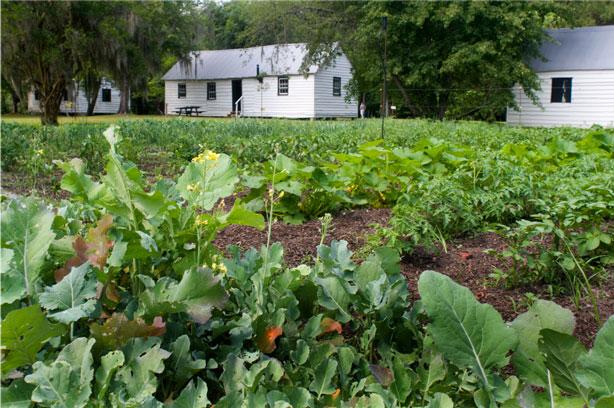 Magnolia Plantation and Gardens Slave Quarters