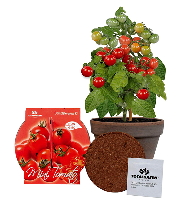 urban_gardens_mothers_day_gifts_for_gardeners_indoor_tomato_growing_kit