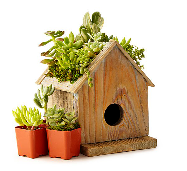 Birdhouse_succulent_planter_Kids_activity_set