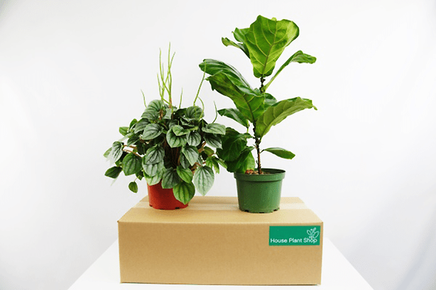 house_plants_monthly_subscription_box_gardeners_gifts