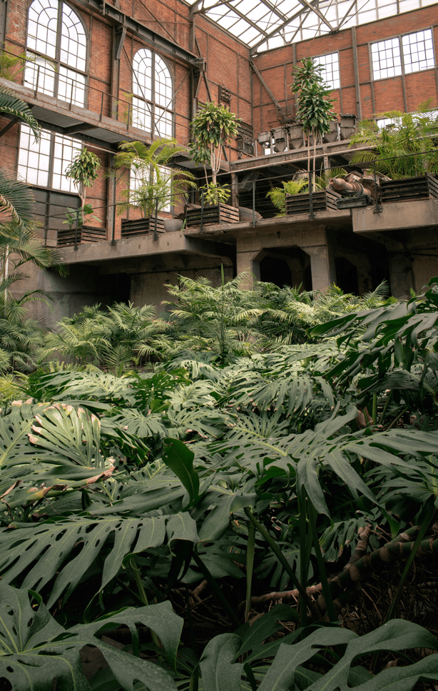 A Hidden Greenhouse Garden in Mexico City Abandoned Factory