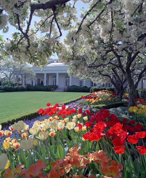 bunny_mellon_white_house_rose_garden_crabapple_trees
