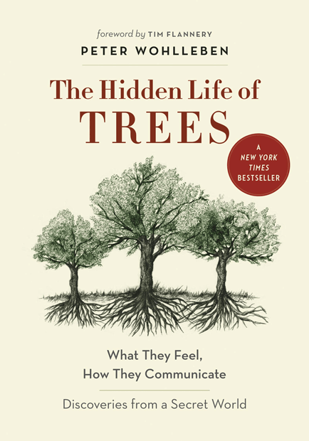 hidden_life_of_trees_how_they_feel_and_communicate