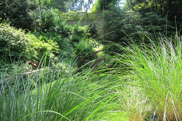ornamenta-grasses_lawn_alternative