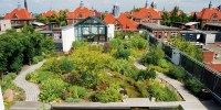 Intensive green roofs | Urban green-blue grids