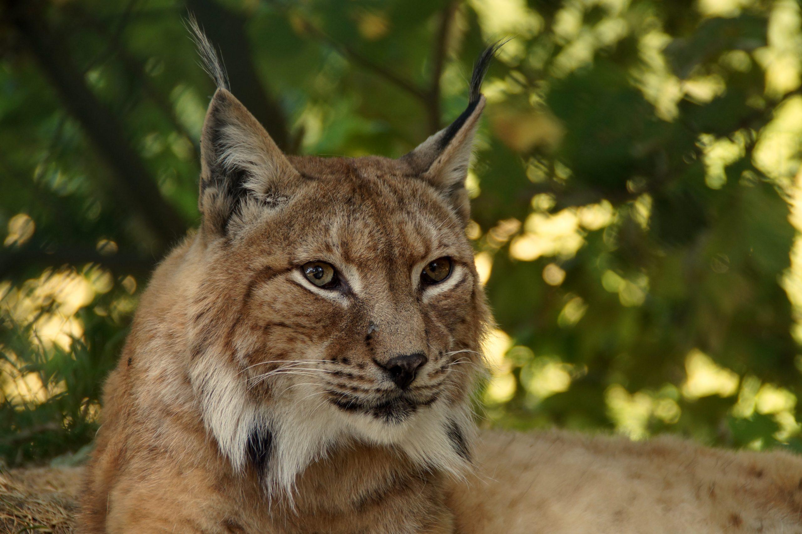 Animal Medicine Card Readings | Los Angeles