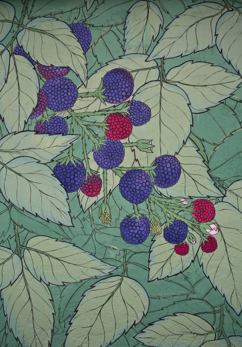 doa-wild-fruits-8