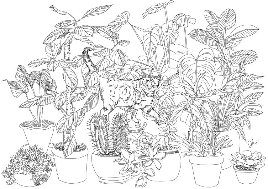 Edible Paradise: A Coloring Book of Seasonal Fruits