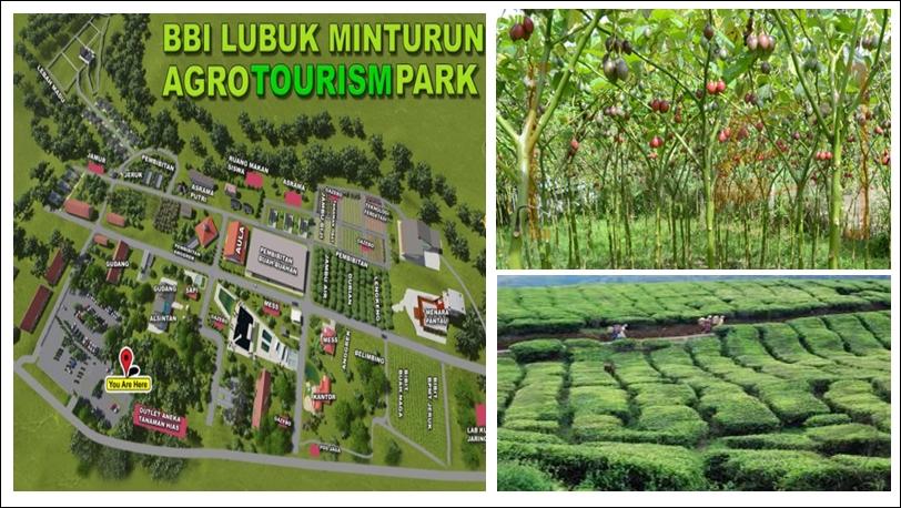 Potensi Agrowisata di Sumatera Barat