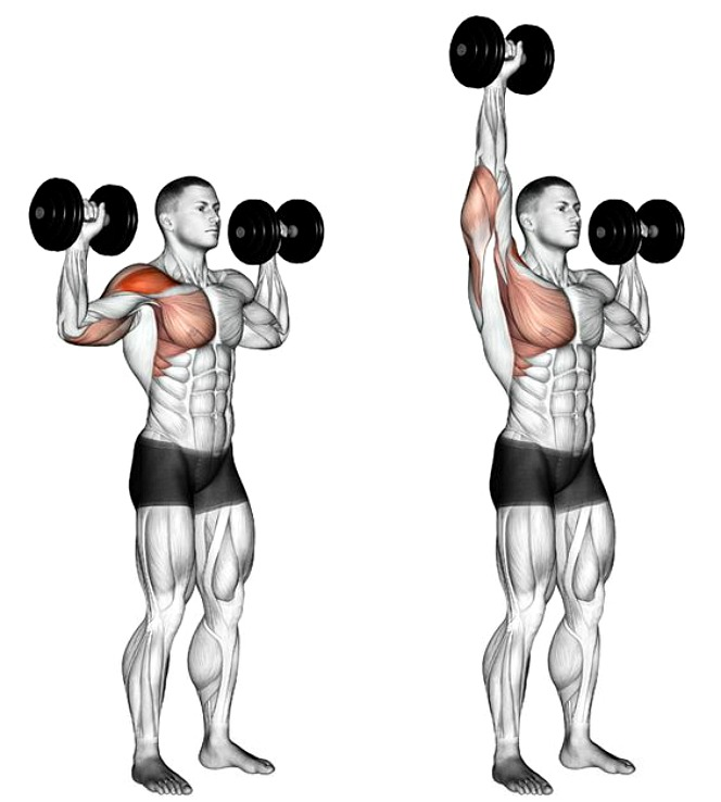 Best Beginner Weight-Training Guide With Easy-To-Follow