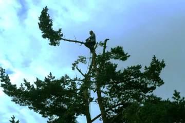 Arborists & Tree Surgeons Edinburgh