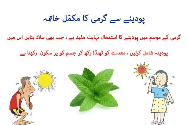 Home Remedies to Reduce Body Heat by Using Mint : Garmi ka tor podine se